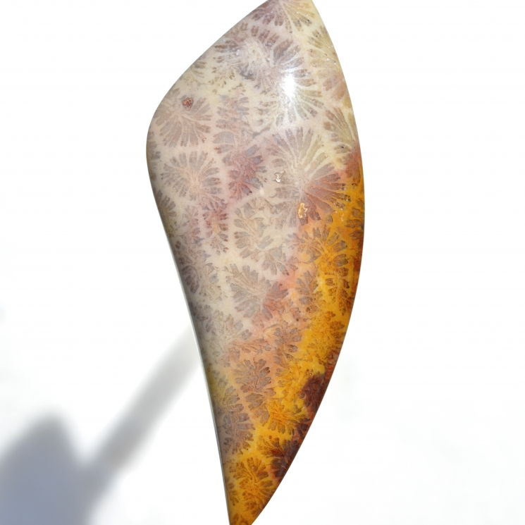 Indonesian Fossil Coral Lexx Stones